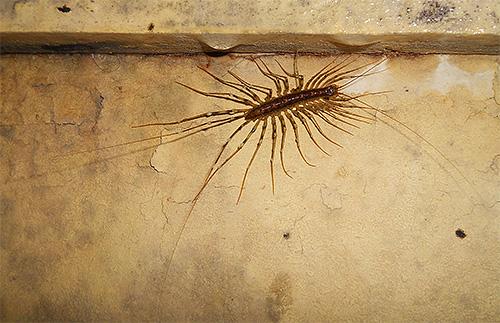 Мухоловка обыкновенная питается комарами и другими мелкими насекомыми
