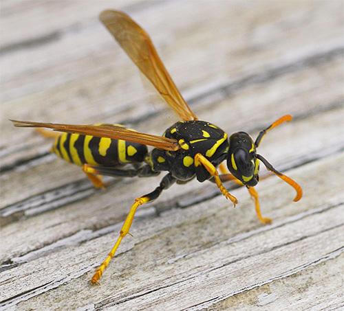 Существует довольно большой ассортимент импортных средств, которые можно применять после укусов насекомых