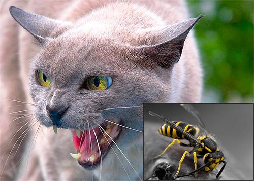 В некоторых случаях укус осы может действительно представлять для кошек повышенную опасность...
