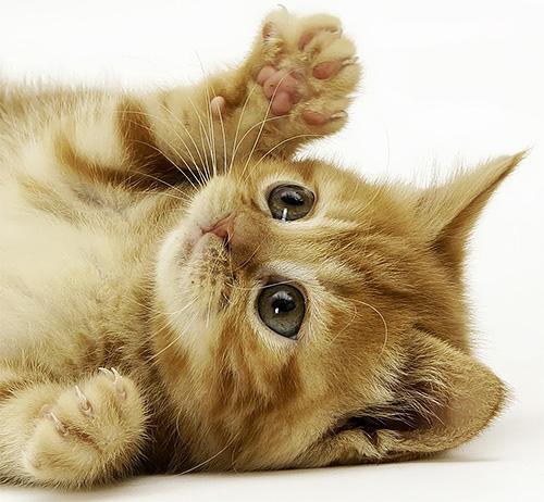 Для маленьких котят укус осы может оказаться смертельным...