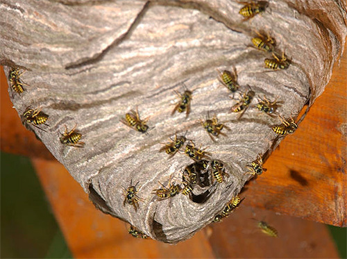 Еще один пример осиного гнезда.