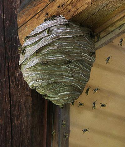 Если жилище насекомых расположено слишком близко к деревянному дому, то применять огонь категорически нельзя.