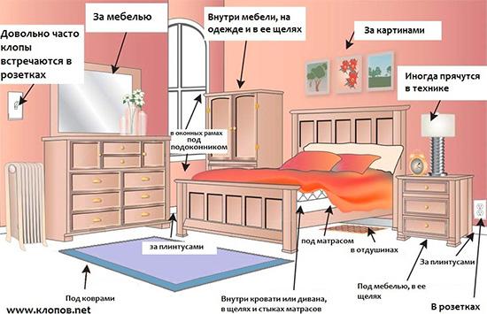 На картинке показаны места, где чаще всего клопы прячутся в доме.