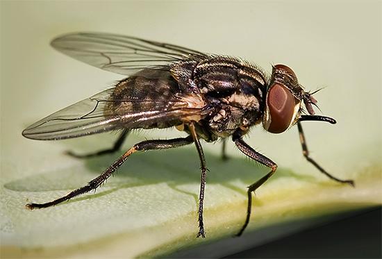 Хороший уничтожитель насекомых легко справится, например, с мухами, случайно залетающими в дом.
