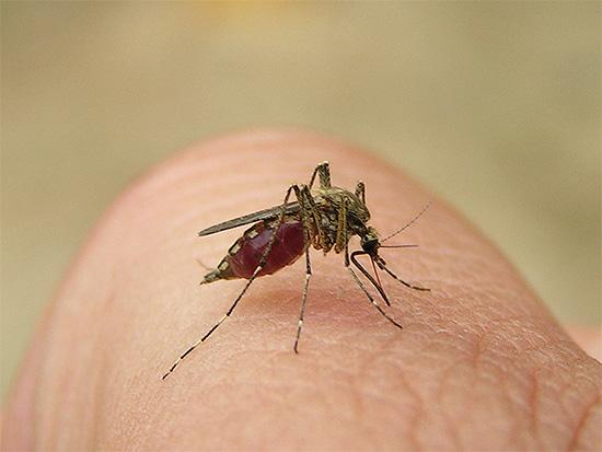Комары в доме своими руками