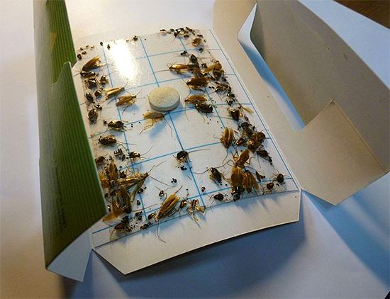 На фото показан пример клеевой ловушки для тараканов