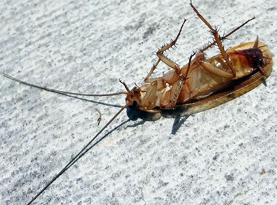 Барьерный эффект средства Дельта Зона обеспечивает гибель тех насекомых, которые приходят от соседей.