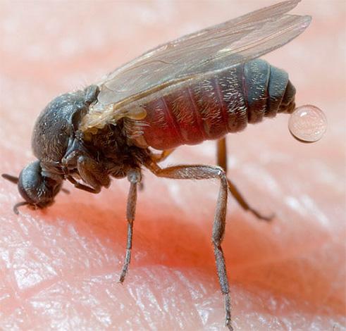 Укусы насекомых, например, в тайге (гнус) могут приводить к весьма тяжелым последствиям, если изначально не принять соответствующих защитных мер.