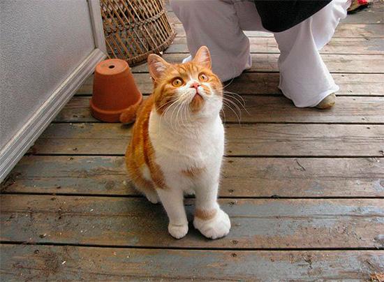 Укус осы у кошек и собак приводит к отеку пораженного места - как и у человека.
