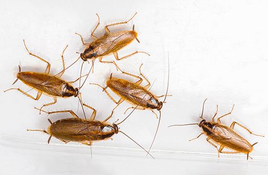 А вот тараканы к ультразвуку слабой мощности безразличны вообще.