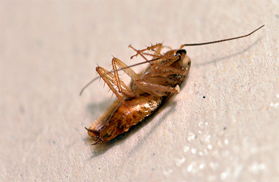 Быстро поморить тараканов гелем не получится, но для постепенного уничтожения насекомых он хорошо подходит.