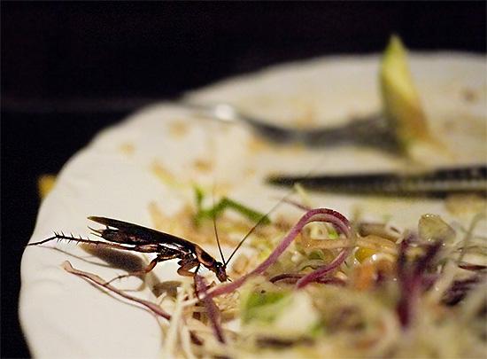Большое количество продуктов попросту выбрасывается после того, как на них были замечены тараканы.