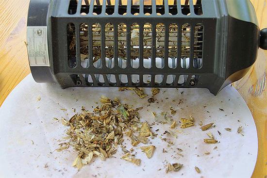 На фотографии показаны останки уничтоженных лампой насекомых.