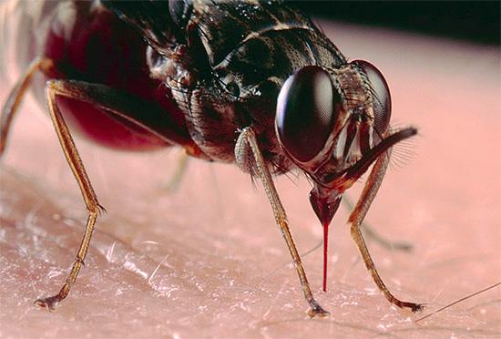 Прежде чем лечить последствия укусов насекомых, весьма важно бывает сперва разобраться, а кто же, собственно, покусал, поскольку средства и методы помощи в разных случаях могут существенно различаться.