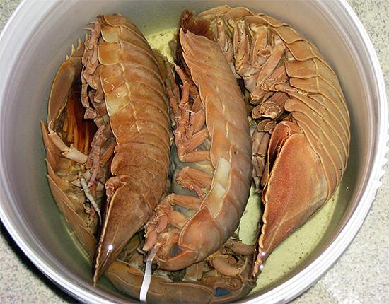 Такие мокрицы сами являются пищей для человека, наряду с креветками, лобстерами и крабами.