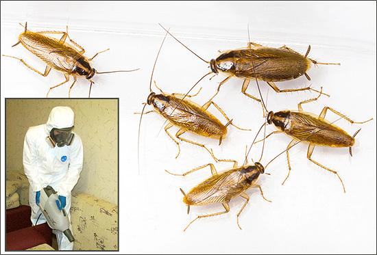 Если вы собрались заказывать обработку помещения от насекомых (либо хотите проводить дезинсекцию самостоятельно), то для начала полезно будет узнать об этой процедуре некоторые важные практические нюансы...