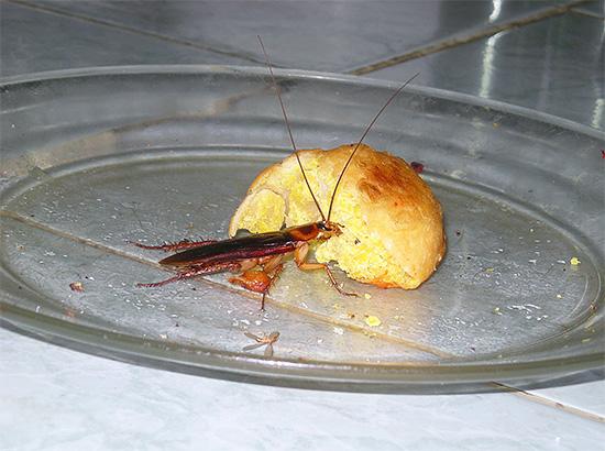 При большом количестве насекомых в доме обработка помещения должна быть комплексной, так как иначе эффект может оказаться весьма незначительным.
