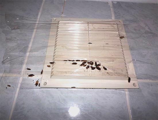 Насекомые могут проникать в квартиру через вентиляционные ходы.