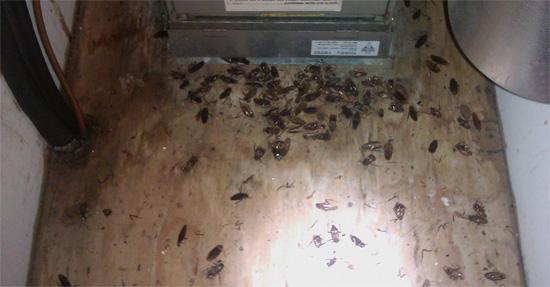 Тараканы возле вытяжки на кухне