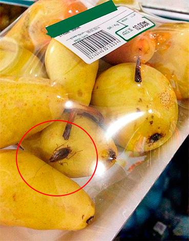 Таракан на фруктах в супермаркете