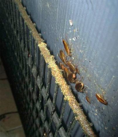 Тараканы на стене подъезда