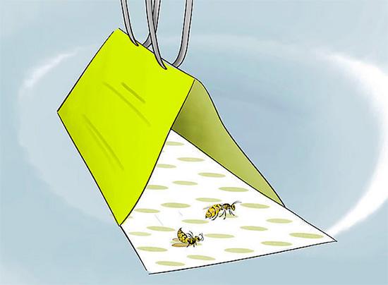 Сев на такую клеевую поверхность, осы уже не смогут от нее оторваться.