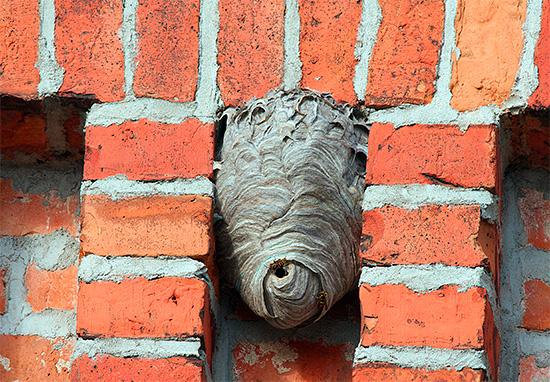 На фото показано осиное гнездо на кирпичной стене дома.