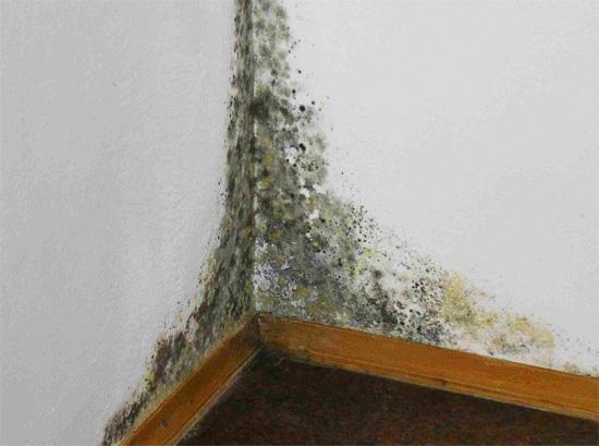 Важно как можно скорее избавиться от сырости в помещении, так как это может привести к обильному развитию плесени.