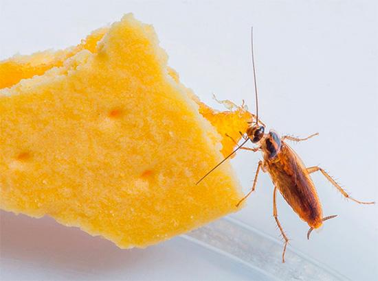 Попробуем разобраться в непростой истории происхождения различных прозвищ тараканов (стасики, танчики, феликсы и др.)