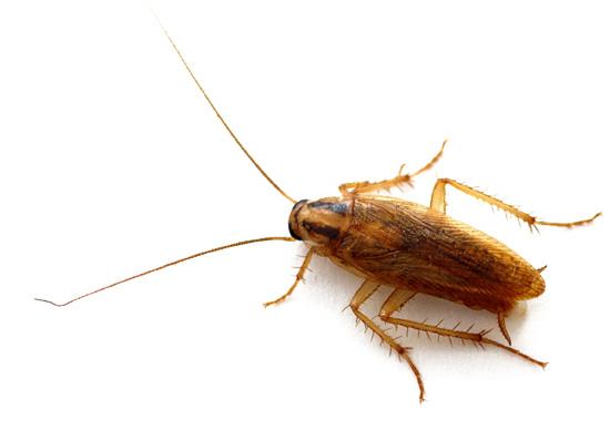 По-немецки усы - Schnurrbart, возможно, поэтому тараканов иногда называют Шуриками.