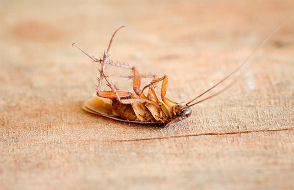 При использовании дымовой шашки от тараканов в квартире важно соблюдать при работе соответствующие правила безопасности...