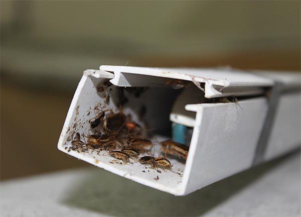 Даже вот в таком укромном месте тараканам будет не выжить...