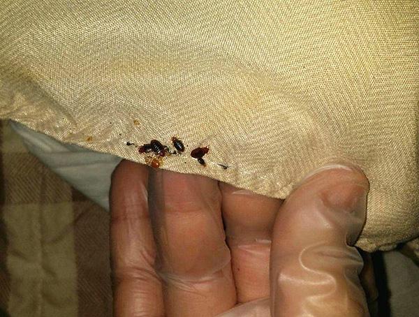 Особенно тщательно нужно обрабатывать места возможного укрытия насекомых.