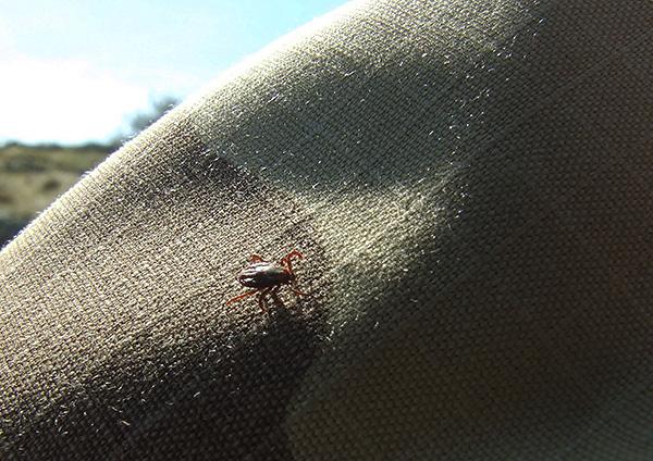 Даже просто контактируя с обработанной инсектицидно-репеллентным составом одеждой, клещ довольно быстро погибает.