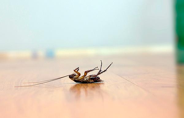Выясняем, с помощью какой отравы можно действительно быстро и эффективно уничтожить тараканов в квартире...