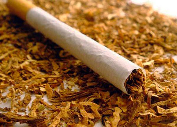 Табак (а точнее, содержащийся в нем никотин) является высокоэффективным средством для уничтожения насекомых.