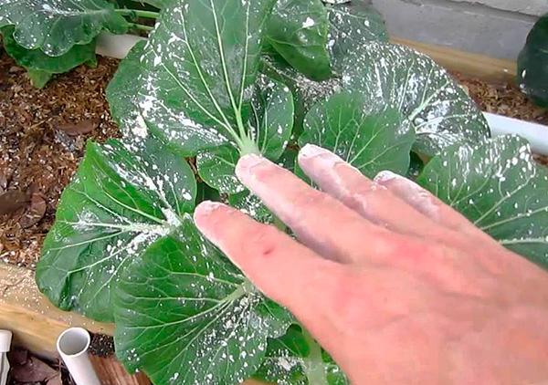 Препарат можно использовать для эффективного уничтожения вредителей на садовых и огородных растениях.