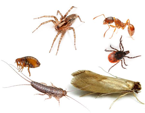 Средство Экокиллер эффективно уничтожает не только клопов и тараканов, но и других членистоногих, зачастую вредящих и паразитирующих в жилье человека или на огородном участке.