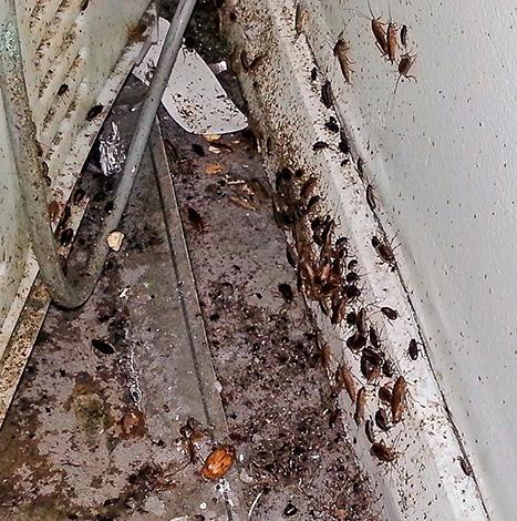 За холодильником и газовой плитой иногда можно обнаружить буквально полчища тараканов...