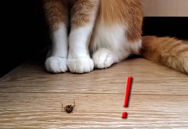 Нельзя допускать, чтобы кошки или собаки поедали отравленных Дихлофосом тараканов.