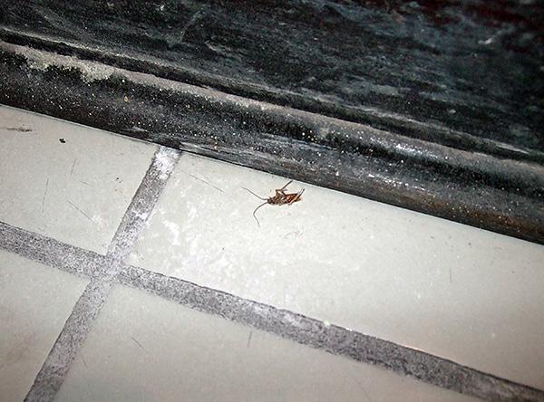 Чем дольше инсектицидное средство не удаляется из мест обработки, тем выше вероятность того, что все тараканы проконтактируют с ним.