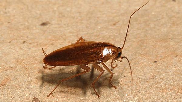 Инсектицидный гель можно также использовать как средство с барьерным эффектом, преграждая им пути проникновения тараканов в квартиру.