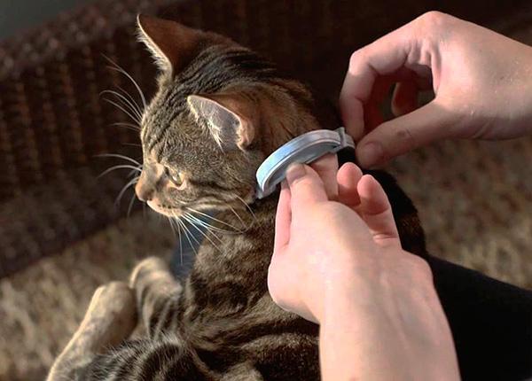 Для профилактической защиты кошки или собаки от блох полезно использовать противоблошиный ошейник.