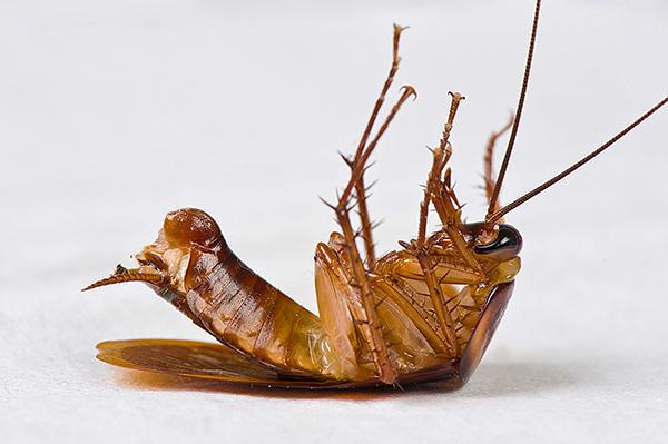 Большинство современных инсектицидных средств оказывают на насекомых нервно-паралитическое действие.