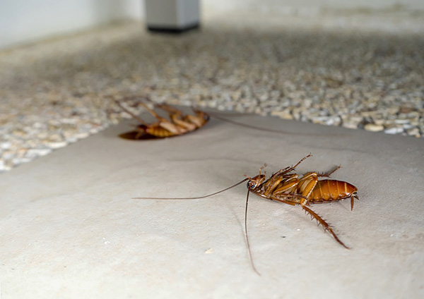 К счастью, сегодня на рынке немало инсектицидных средств, позволяющих эффективно бороться с тараканами в квартире.