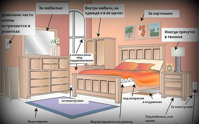На картинке показаны места в помещении, обработке которых нужно уделить особое внимание (там чаще всего можно встретить гнезда клопов).