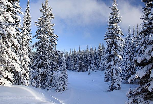 Зимой клещи впадают в своего рода спячку, во время которой биохимические процессы в их организме протекают крайне медленно.