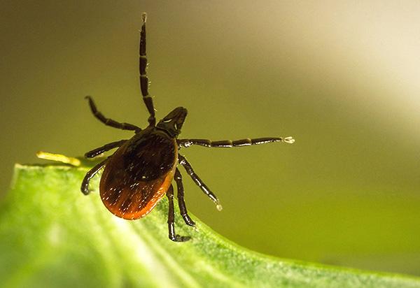 При правильном подходе удается надежно защититься от укусов клещей при выездах на природу.