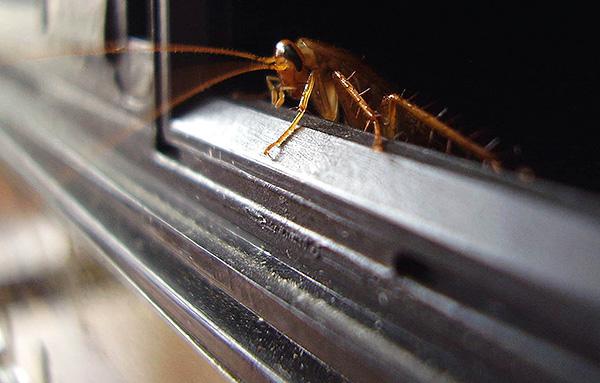 Для надежной защиты квартиры от тараканов важно перекрыть их проникновение от соседей.
