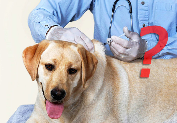 Многие специалисты сомневаются в целесообразности вакцинации от пироплазмоза...